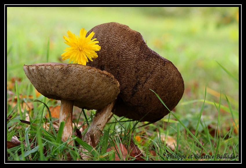Amour tendre... avec des fleurs ! Champignons_24
